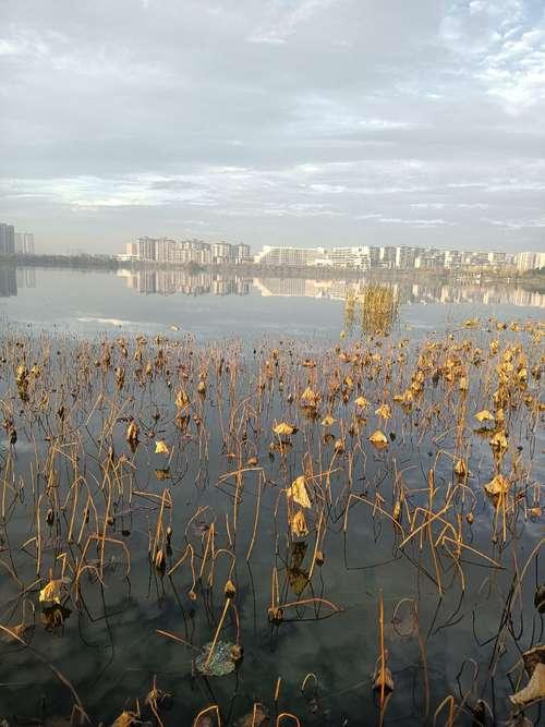 美丽的芙蓉湖,风景美如画